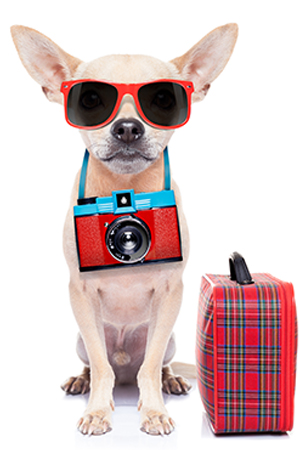 "Cinco de Mayo"" themafeest muziek, dans, catering, decor"